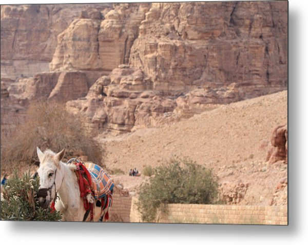 A Donkey In Petra Jordan Metal Print