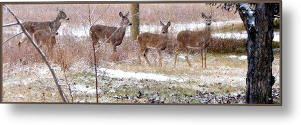 A Dusting On The Deer Metal Print