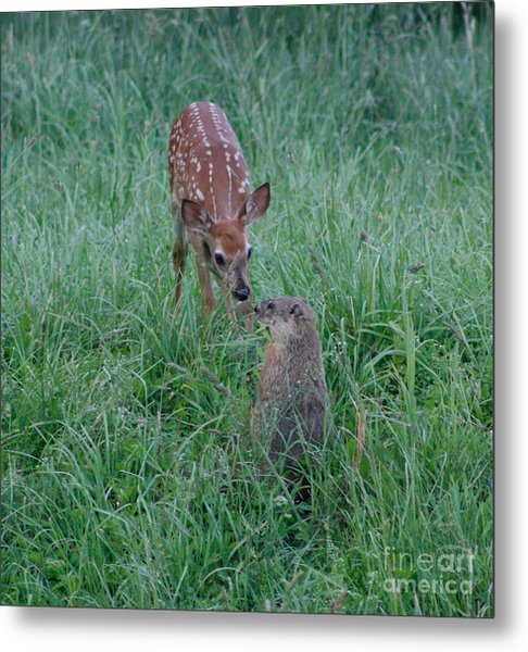 A Fawn And A Woodchuck Metal Print