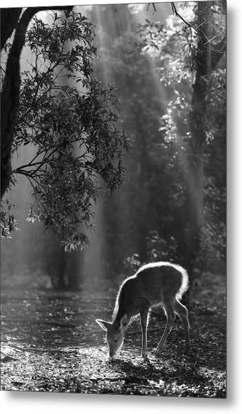 A Fawn In The Forest Metal Print