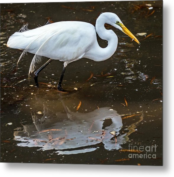 Metal Print featuring the photograph A Fine Catch by Kate Brown