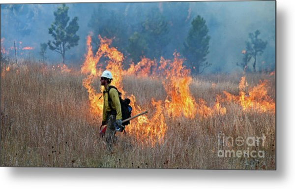 A Firefighter Ignites The Norbeck Prescribed Fire. Metal Print