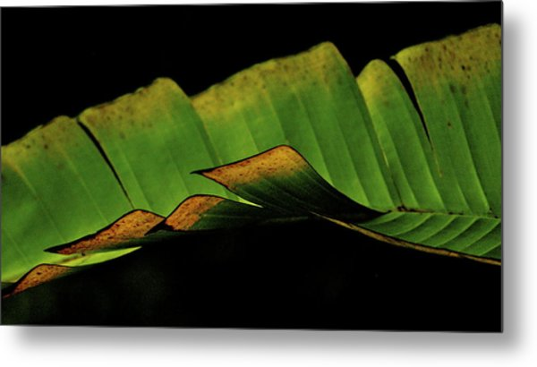 A Floating Heliconia Leaf Metal Print