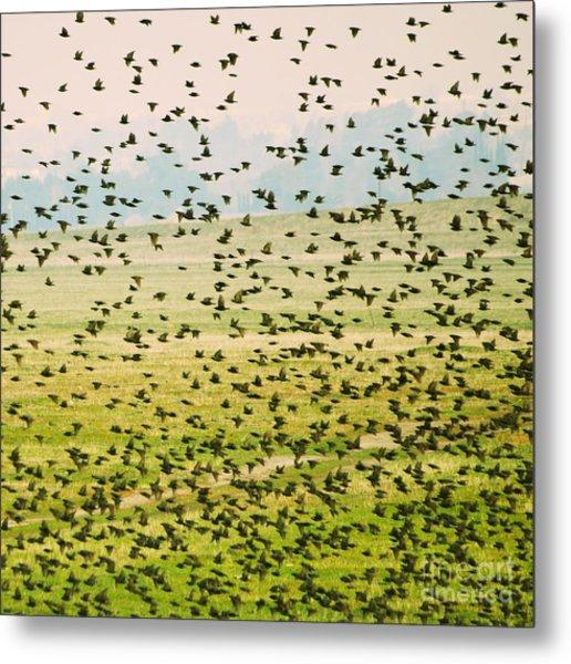 A Flock Of Freedom Metal Print