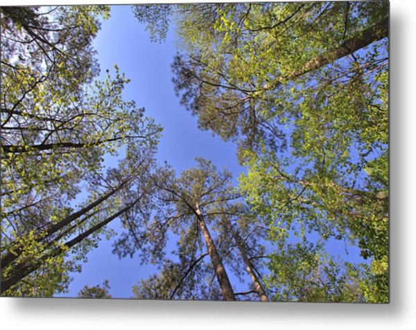 A Forest Sky Metal Print