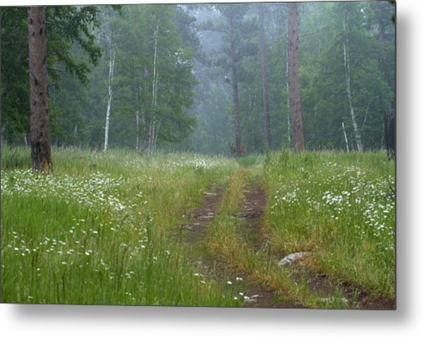 A Forest Visitor Metal Print