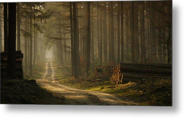 A Forest Walk Metal Print