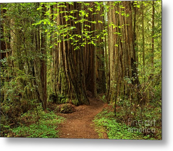 A Forest Welcome Metal Print