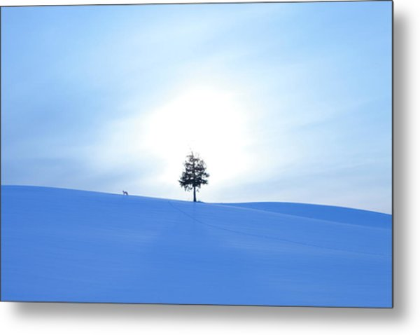 A Fox And A Tree In Snow Field Metal Print by Ichiro