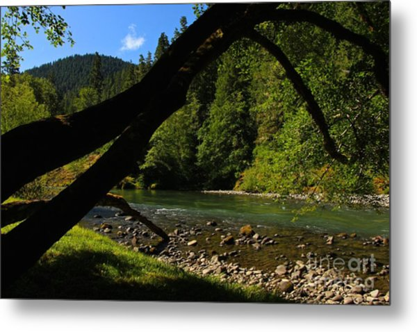 A Golden Day  Metal Print by Tim Rice