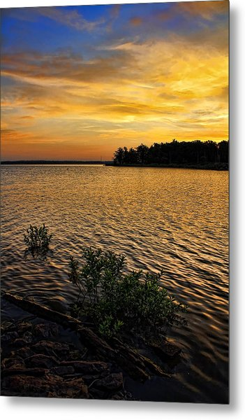 A Golden Morning From 2011 Metal Print by Carolyn Fletcher
