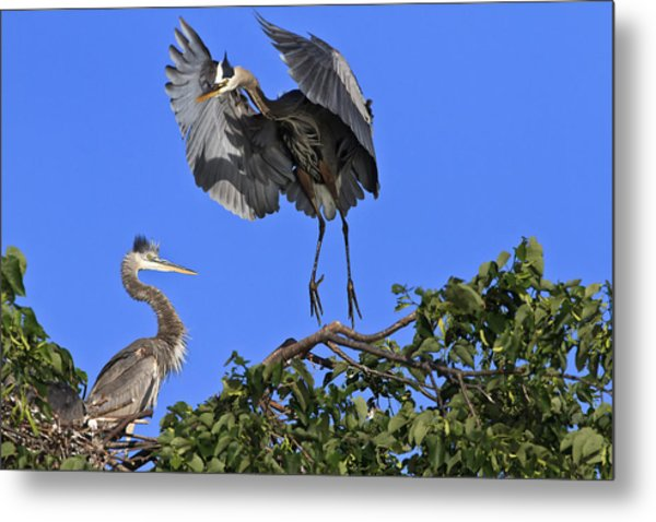 A Graceful Landing Metal Print