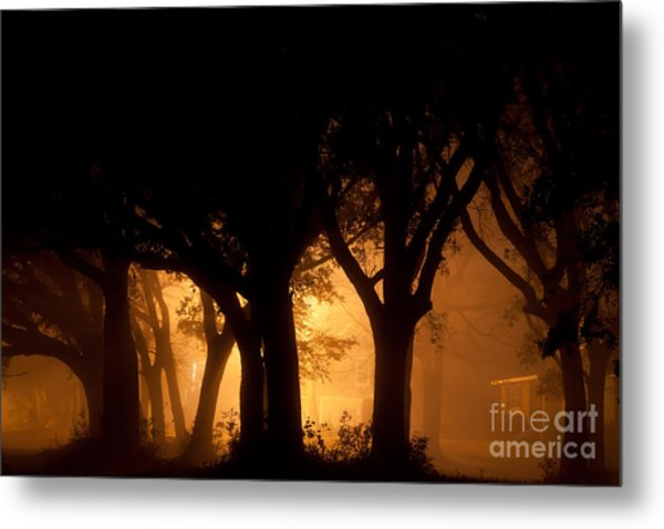 A Grove Of Trees Surrounded By Fog And Golden Light Metal Print