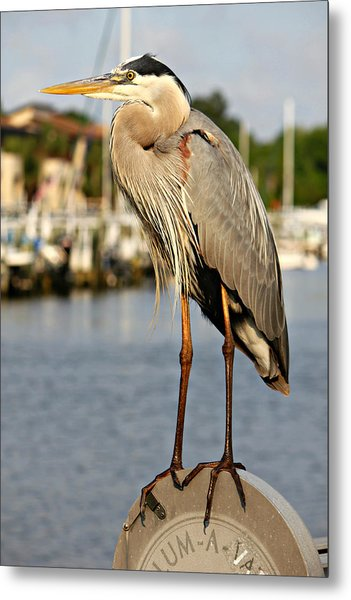 A Heron In The Marina Metal Print