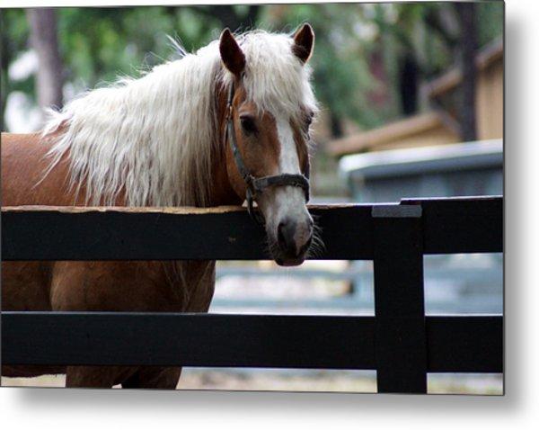A Hilton Head Island Horse Metal Print