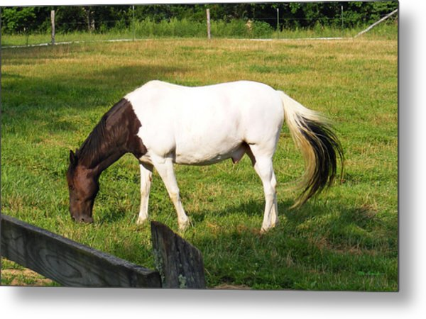 A Horse Named Dipstick Metal Print