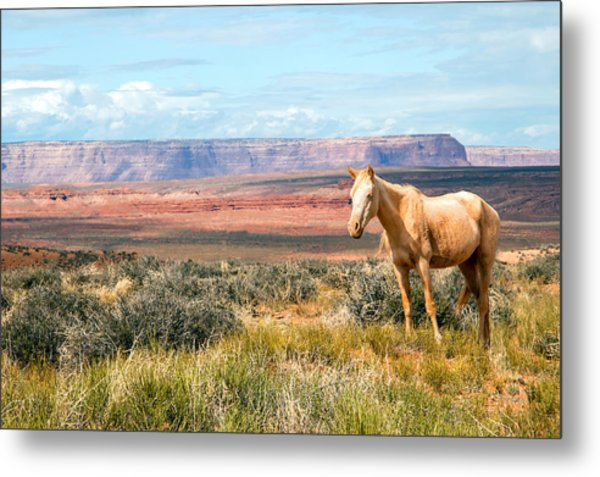 A Horse With No Name Metal Print