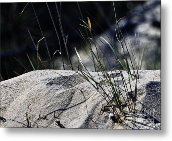 A Light Spring Breeze Metal Print