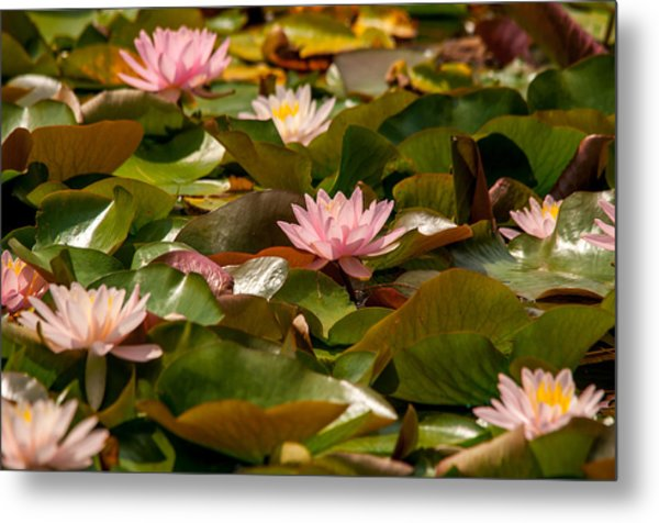 A Lily Carpet Metal Print