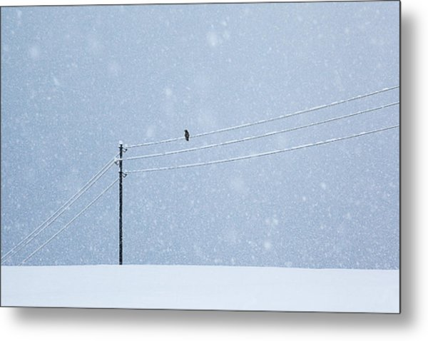 A Long Day In Winter Metal Print