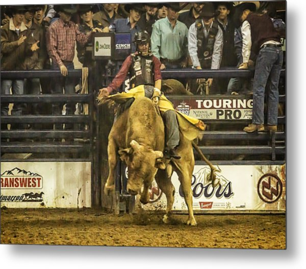 A Lot Of Bull At The National Stock Show Metal Print