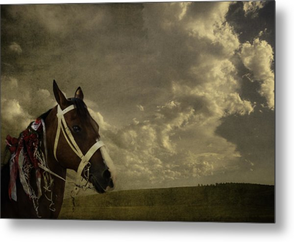 A Lovely Horse Metal Print