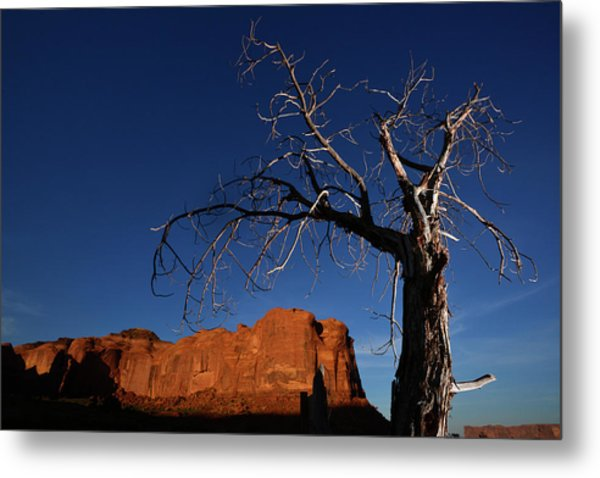 A Mesquite Trees And Buttes Metal Print