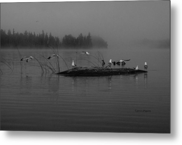 A Misty Greeting  Metal Print