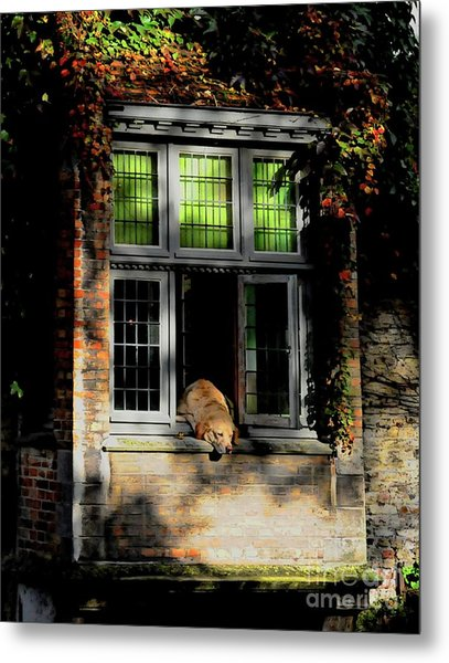 A Nap In The Sun Metal Print