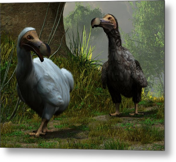A Pair Of Dodos Metal Print