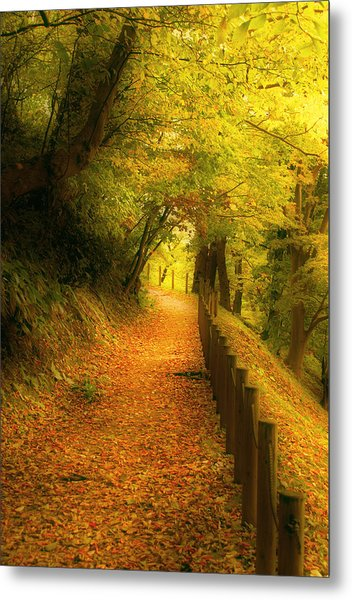 A Path Well Chosen Metal Print