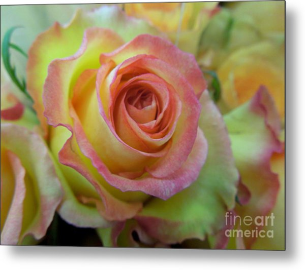A Perfect Rose Metal Print