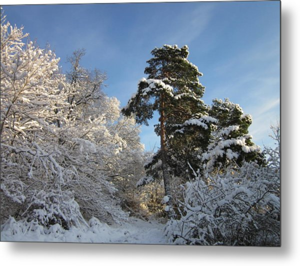 A Perfect Winterday Metal Print