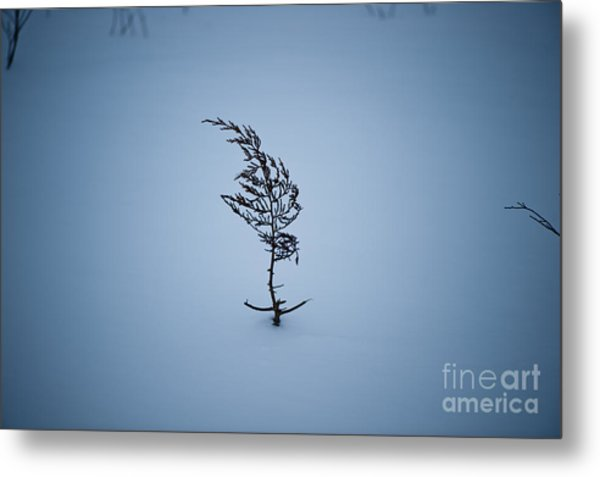 A Prayer For Spring... Metal Print