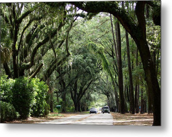 A Pretty Tree Covered Road Somewhere On Hilton Head Island Metal Print