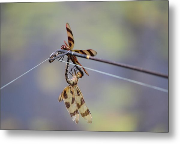 A Private Moment Metal Print