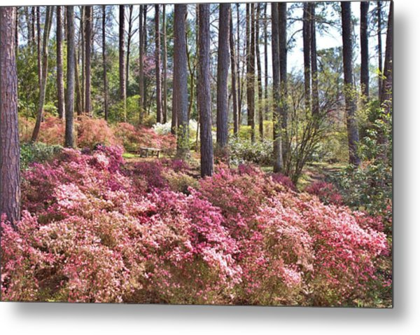 A Quiet Spot In The Woods Metal Print