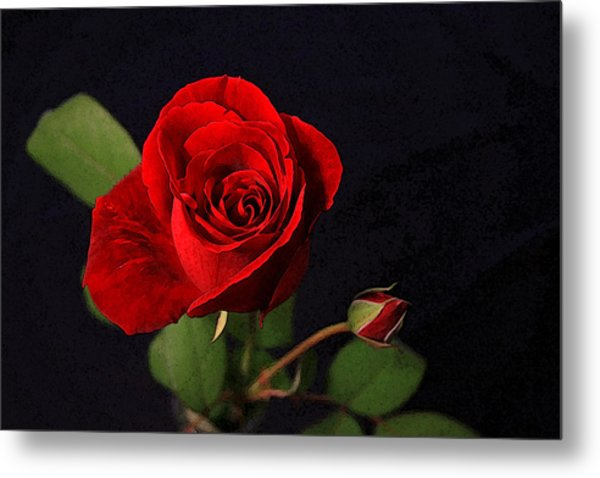 A Red Rose Metal Print by CarolLMiller Photography