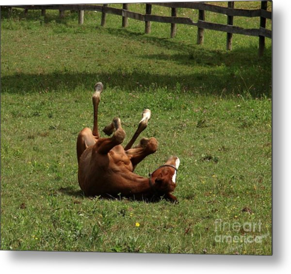 A Roll In The Hay Is For Horses Metal Print