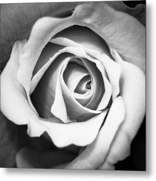 A Rose In Black And White Metal Print
