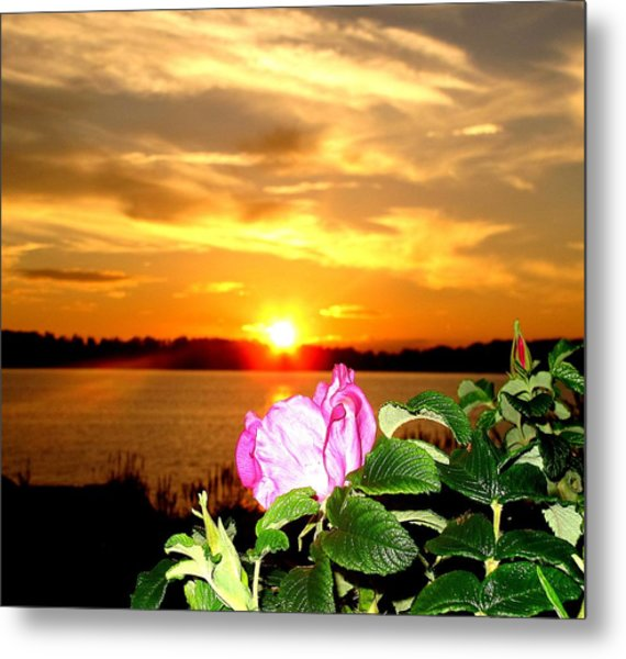 A Rosy Sunset In Maine Metal Print