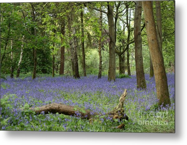 A Sea Of Bluebells Metal Print