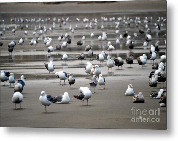 A Seagulls Life Metal Print by Sheldon Blackwell