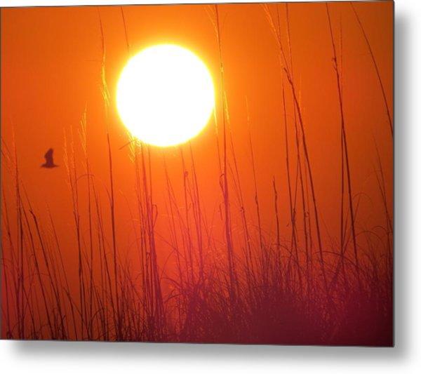 A Seagull's Sunrise Metal Print