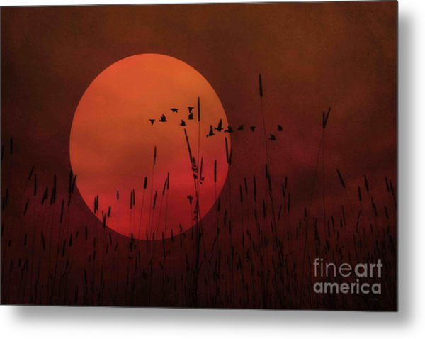 A Simple Sunset In June Metal Print by Tom York Images