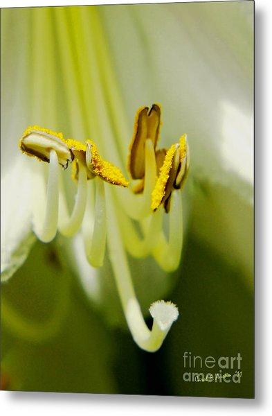 A Single Flower In Full Bloom Metal Print