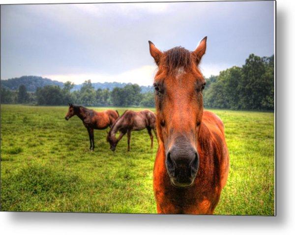 A Starring Horse 2 Metal Print