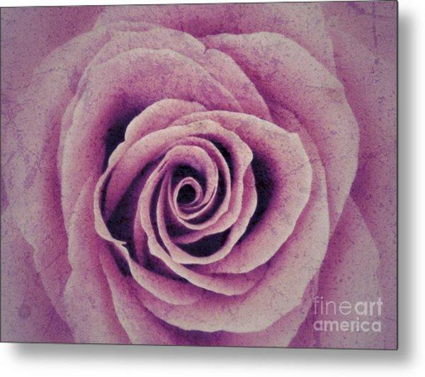 A Sugared Rose Metal Print