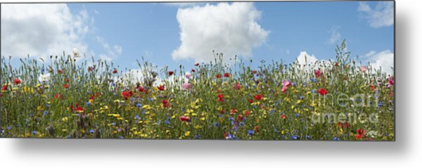 A Summers Day Metal Print by Tim Gainey