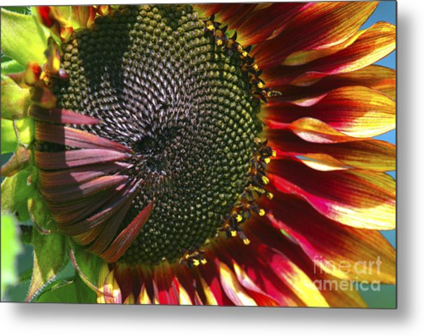A Sunflower For The Birds Metal Print